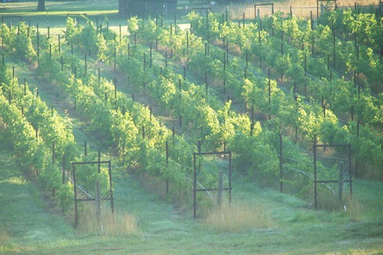 Our Approach - Hanover Park Vineyard